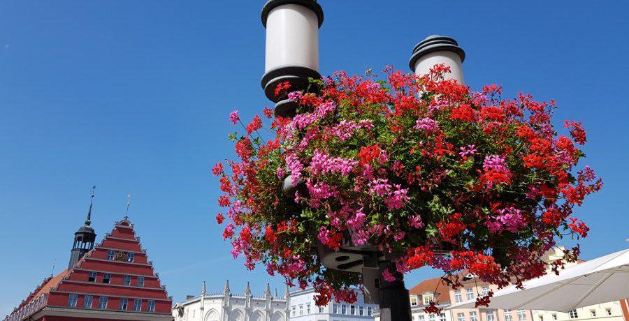Blumenampel Greifswald