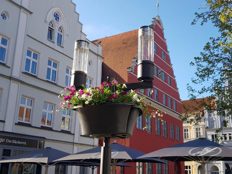 Greifswald blüht wieder auf